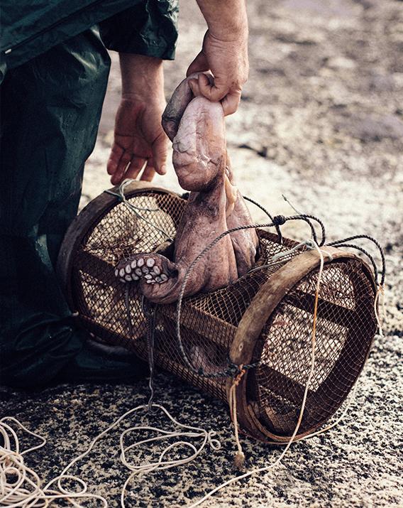 Cómo se pesca el pulpo de manera artesanal